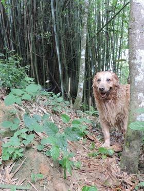 Cães em foco 1 (160)