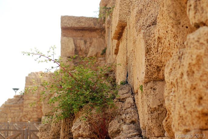 Caesarea10