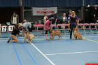 20130510-Bullmastiff-Worldcup-0157.jpg