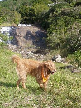 Dogs Trekking 4 (115)