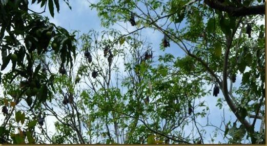 treebats