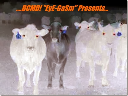 bcmd-demon-cow