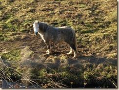 Bevingen, Straeten: wachtbekken 'De Dorpsweide' voor het overstromen van de Cicindriabeek. Een eenzame pony