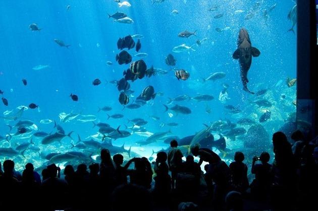 georgia-aquarium-02