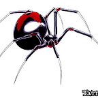 spiders-16.jpg