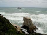 North Island - Gannet colony