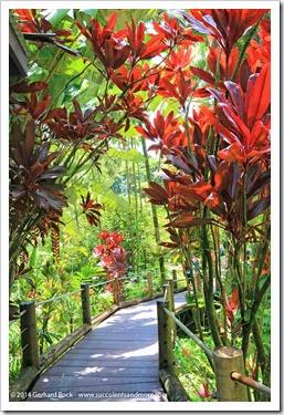 140728_HawaiiTropicalBotanicalGarden_0027