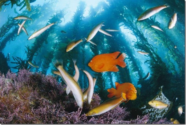 Fotos subaquáticas de David Doubilet (33)