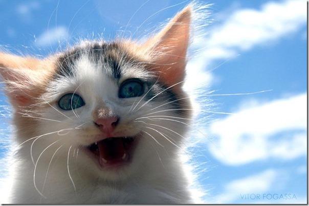 Gatos Felizes (12)