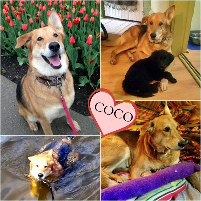 coco collage