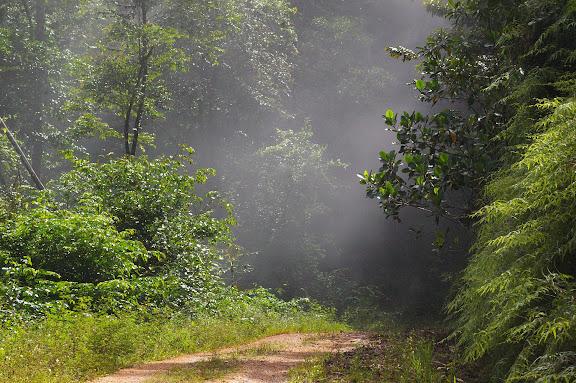 Piste de Coralie (Guyane) : brume matinale. 28 novembre 2011. Photo : J.-M. Gayman