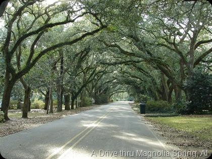 A drive in Magnolia Springs Alabama