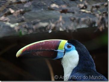 Tucano Parque das Aves Foz do Iguaçu BlogTurFoz