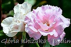 2 - Glória Ishizaka - Rosas do Jardim Botânico Nagai - Osaka