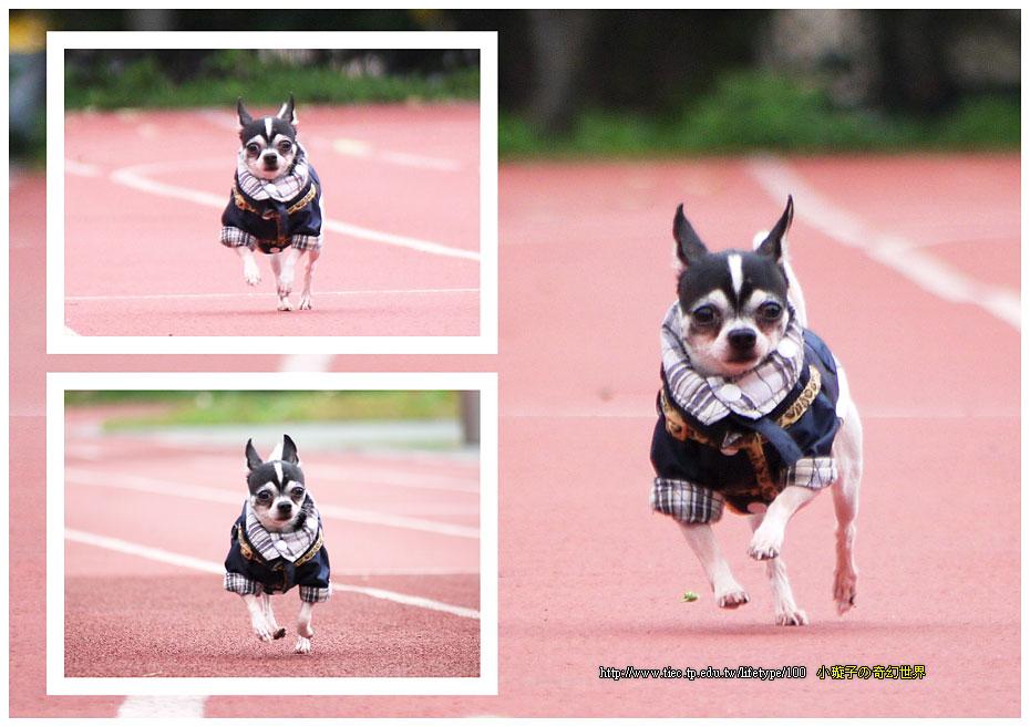 dog-fly03.jpg