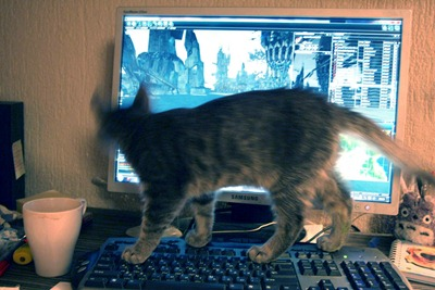 The Gamer Cat is playing with Perpetuum Online