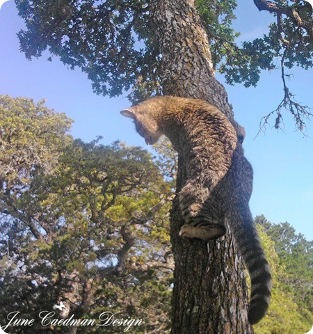 Tracker_Tree