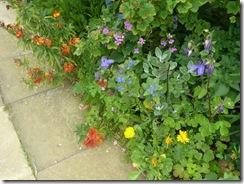cromarty potters garden