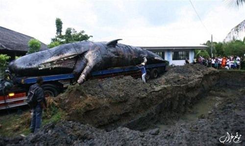 دفن الحيتان في الفلبين