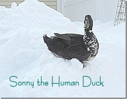 Sonny t