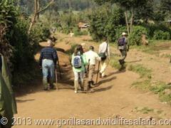 going-gorilla-tracking-rwanda