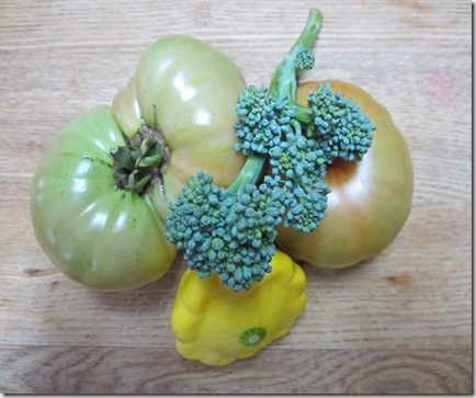 Tomatoes, patty pan and broccoli