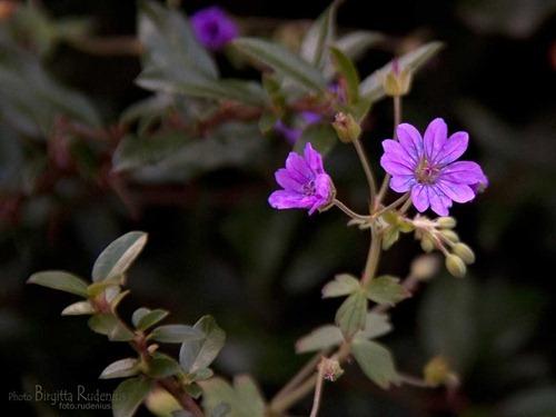 blom_20111021_nava