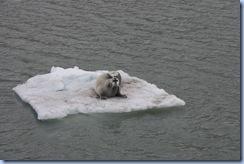 Svalbard 11 239