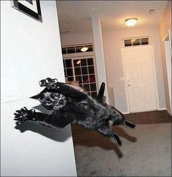 gatinho goleiro