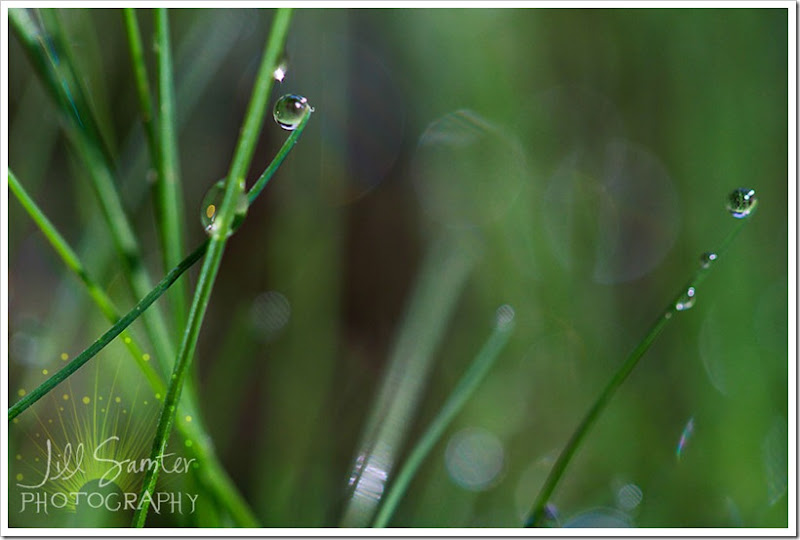 dewdrops-4720