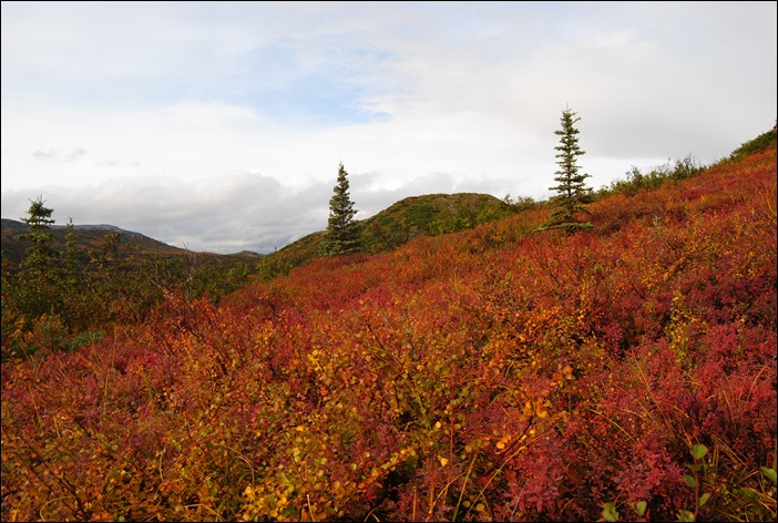 2013_08_Alaska 1096