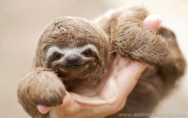 filhotes-de-animais-fotos-cute-cuti-desbaratinando (26)