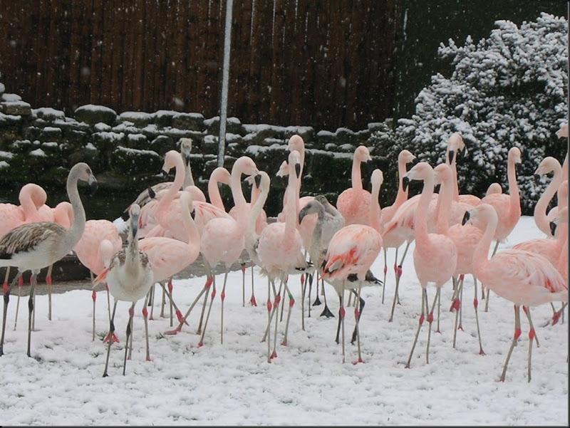 snowyflamingo