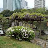 hibiya park in Tokyo, Tokyo, Japan