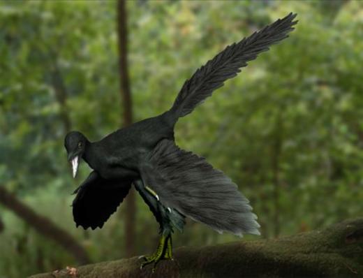10_Archaeopteryx_NT_Wikimedia
