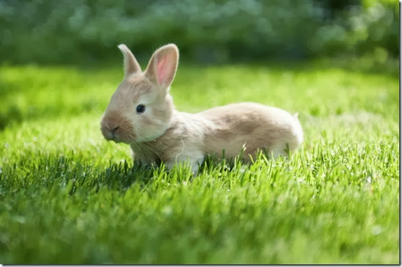 cute-baby-animals-12