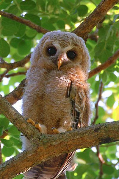 Owl4jpg