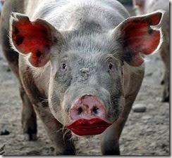 pig red lipstick