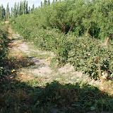 Hami - Allée champs de melon