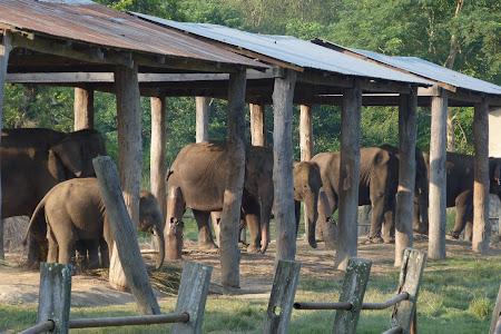 Centru inmultire elefanti