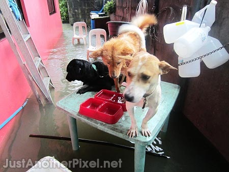 Our pet dogs who were scared as hell