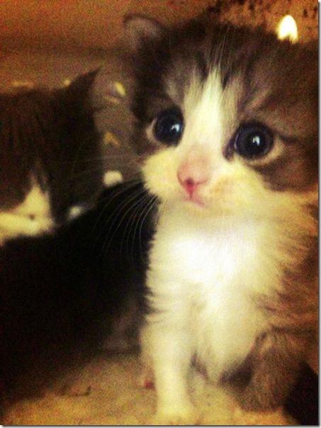 funny-animals-cute-5