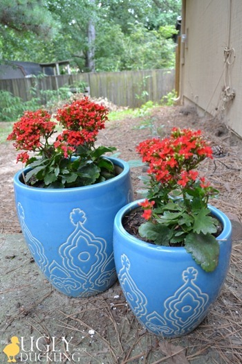 Homegoods backyard planters with red flowers