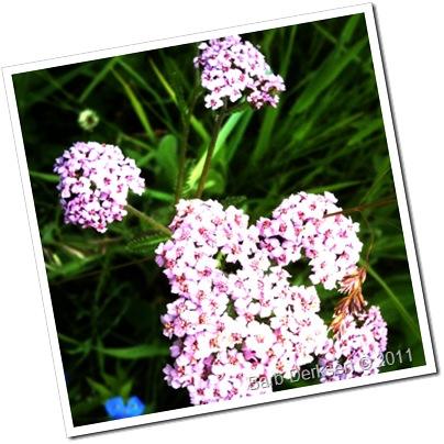June 14 flowers