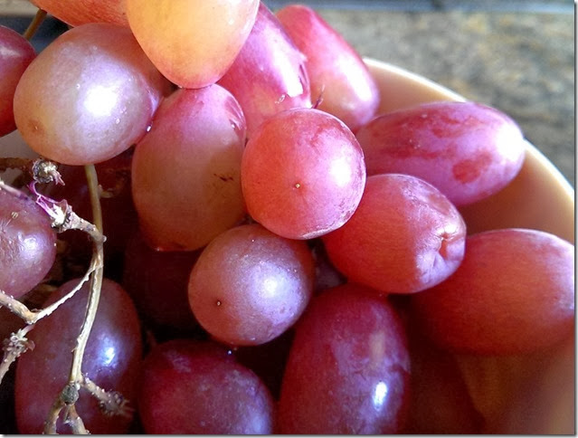 grapes-public-domain-pictures-1 (2294)