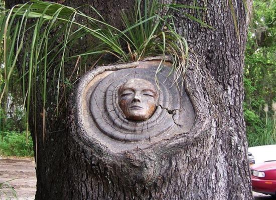espírito árvore 03