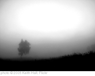 'single tree in the mist' photo (c) 2005, Keith Hall - license: http://creativecommons.org/licenses/by/2.0/