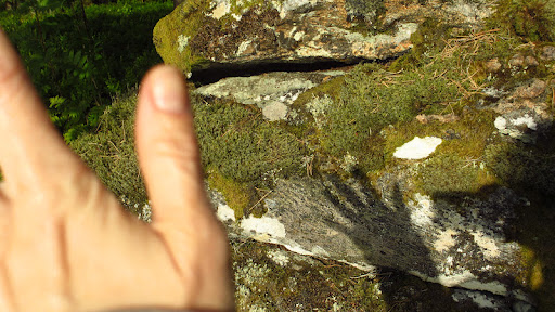 Here is the shadow of my hand on some Swedish moss- waving a big