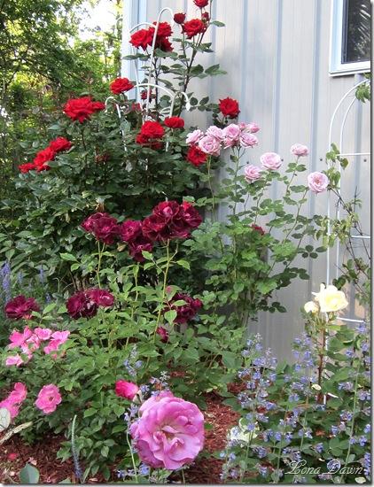 Rose_Garden_May19