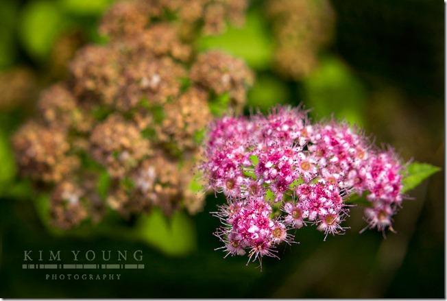 petite-pink-flowers-web